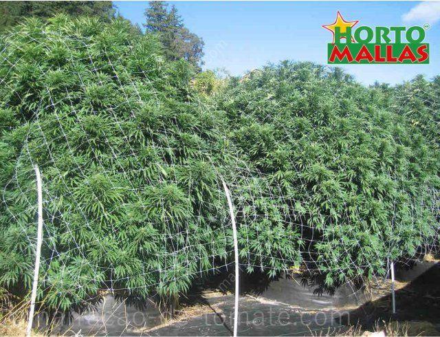 Arbustivas plantas medicinais crescente com apoio de malha treliças