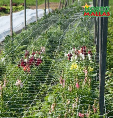 Cultivo de flores ornamentais, com apoio de malha treliças para caules