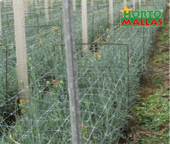 Cultivo de flores ornamentais, com o apoio caules treliças de malha