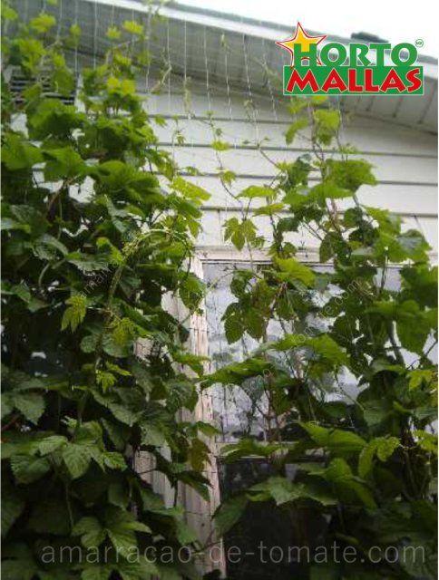 Trepadeiras que crescem tecidos em malha treliças no jardim